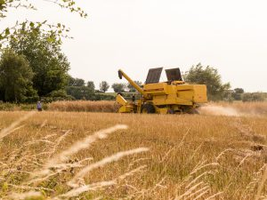 Harvest season