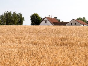 Barley barn ...